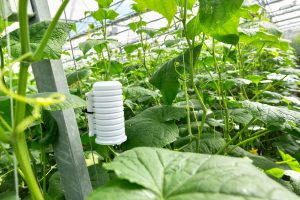 yookr weconnect smart farming crop monitoring solution future of agriculture